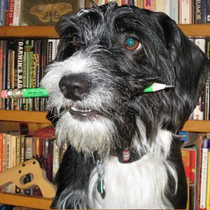 ask-a-terrier-main-pic-w-bookshelf