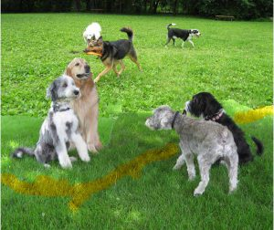 On first meeting, dogs often dare each other to cross a line. Usually made with pee.