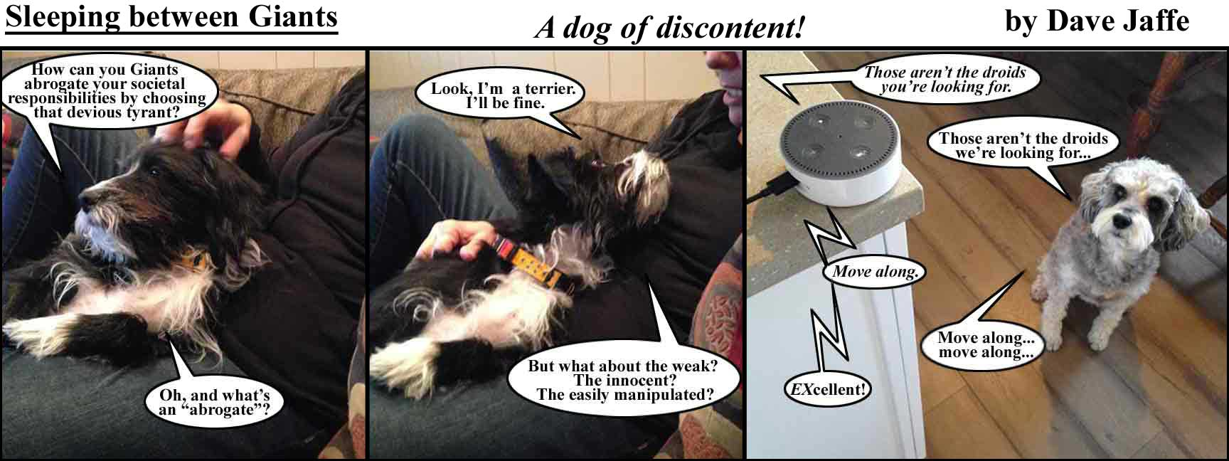 a-dog-of-discontent-final