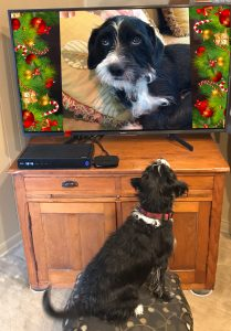 Like many of us, terriers closely identify with certain Hallmark movie characters.