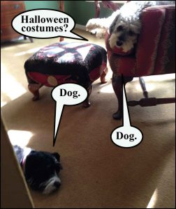 <strong>As Halloween approaches, dogs carefully manage their expectations.</strong>
