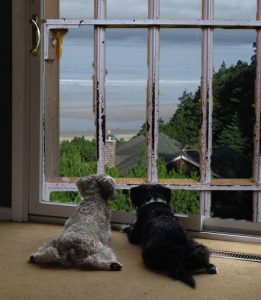 <Wary dogs view a stay in a luxury kennel as just crate training at a Sandals Resort.</strong>