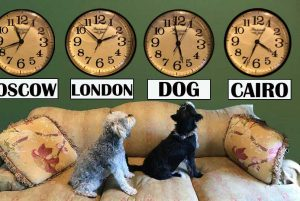 "Dogs' ""Inner Clock"" is easily confused by the International Date Line."