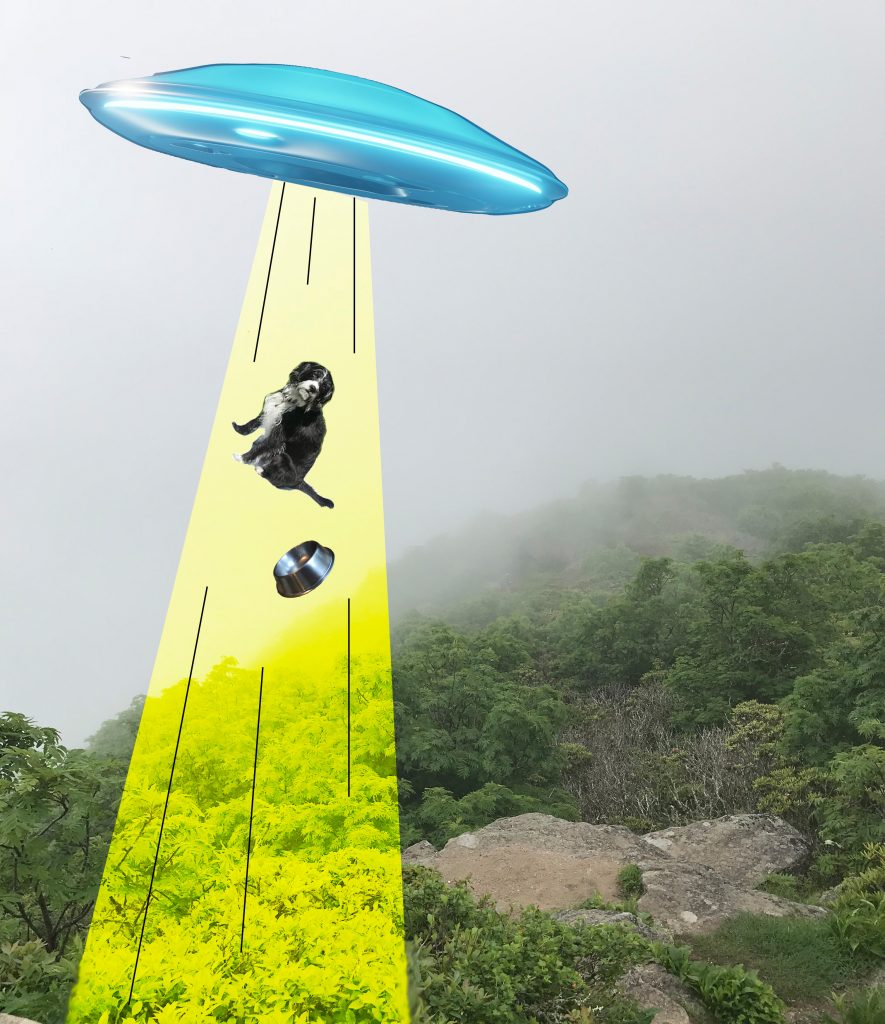 <strong>Do dogs believe in UFOs? The question is, do UFOs believe in dogs?</strong>